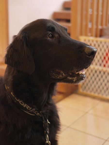 20110228dog2