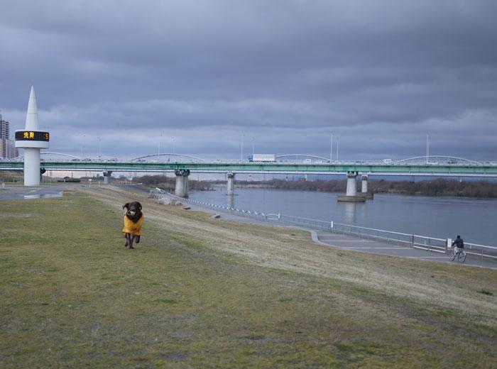 20110228河川敷1