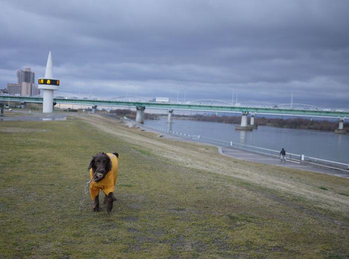 20110228河川敷2