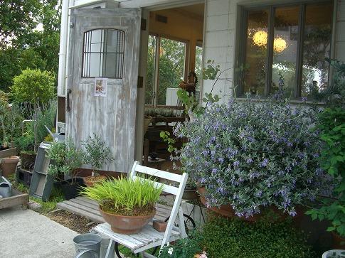 9フラワーハウスフボーの前庭