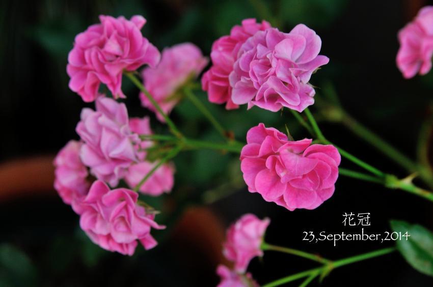 DSC_4275-L_convert_20140925061706.jpg
