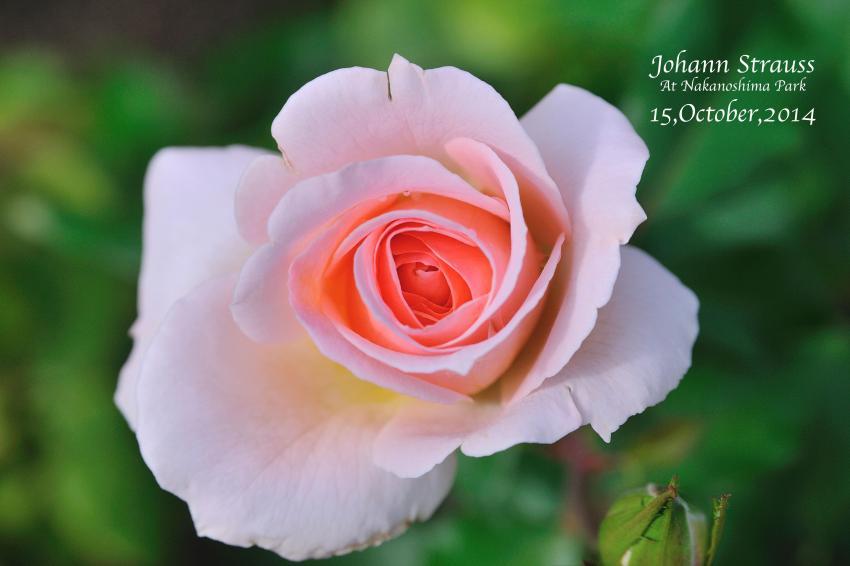 DSC_5269-L_convert_20141018095622.jpg