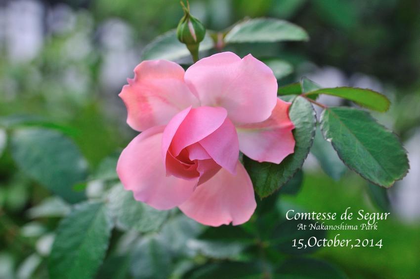 DSC_5274-L_convert_20141018094226.jpg