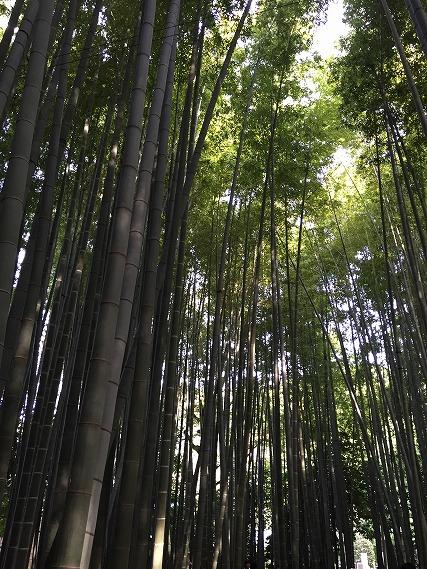 ゆうブログケロブログ鎌倉ハイク (53)