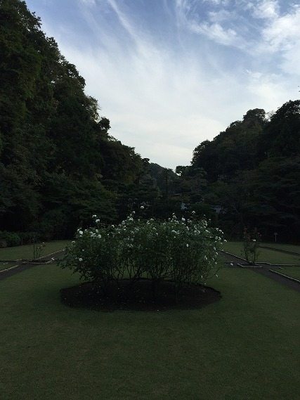 ゆうブログケロブログ鎌倉ハイク (83)