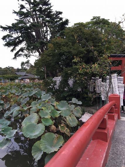 ゆうブログケロブログ鎌倉ハイク (103)