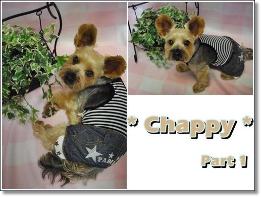 chappy1.jpg