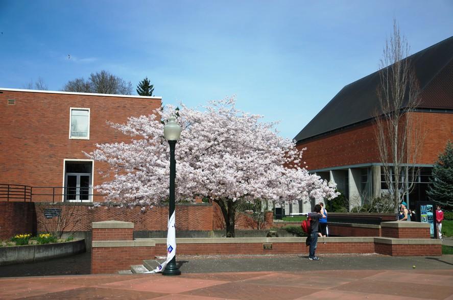 Willamette university1