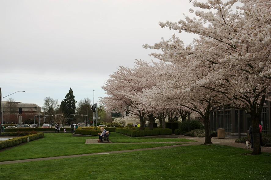 Salem桜 3-8