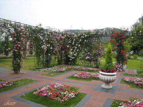 2010.5~6月 子どもの日・テンボスのバラ 116(30)