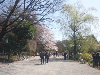 sakura_zenpukuji2.jpg