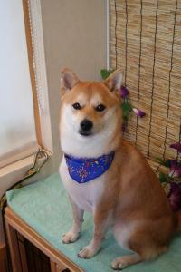 yamato_20120708165013.jpg