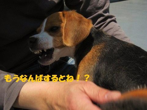 001_20110521085119.jpg
