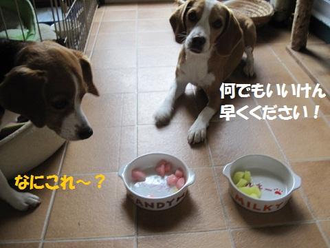 001_20110816070800.jpg
