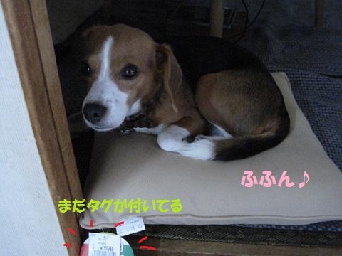 002_20110904082243.jpg