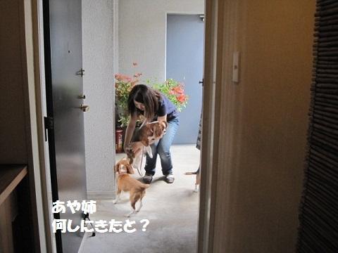 003_20110602072206.jpg