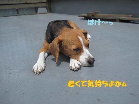 005_20110625080946.jpg