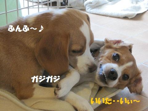 008_20110805064817.jpg