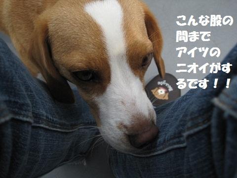 009_20110616071754.jpg