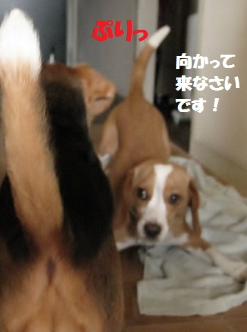 009_20110628075738.jpg
