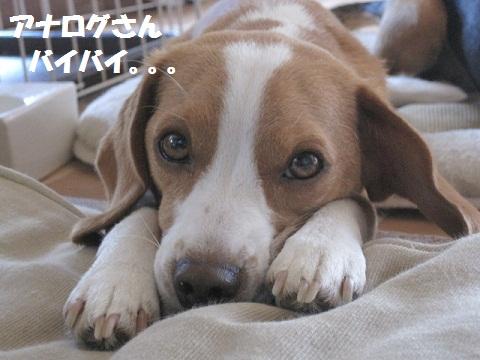 010_20110724065712.jpg