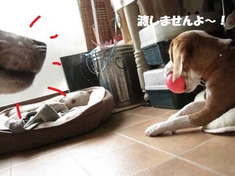 011_20110703081811.jpg