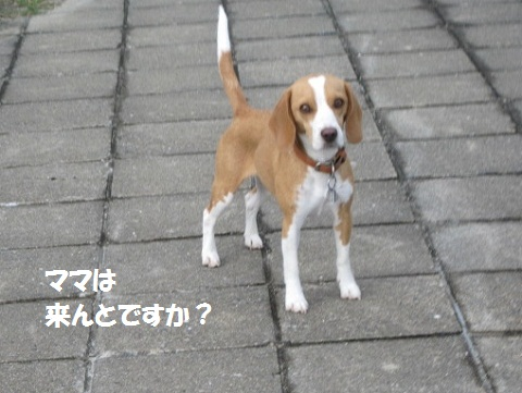011_20110819072318.jpg