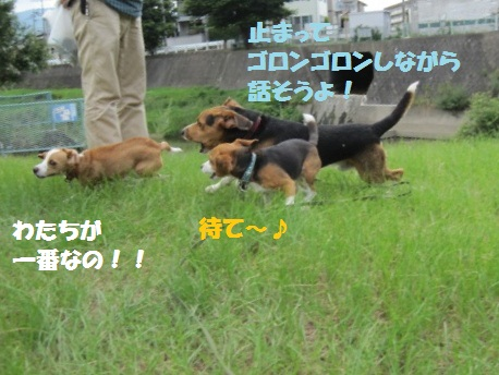 012_20110801072133.jpg