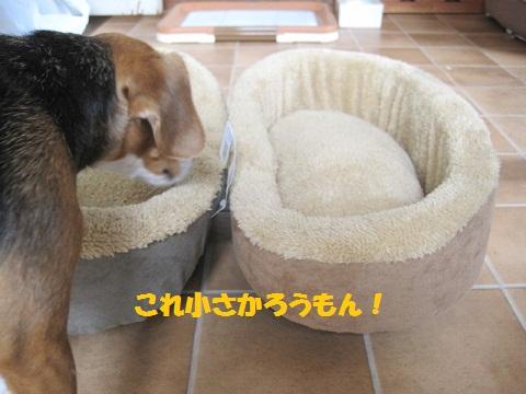 013_20110524075920.jpg