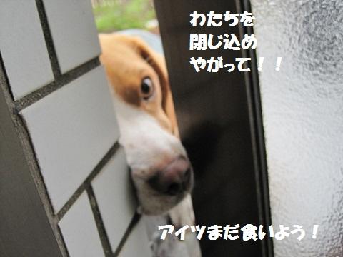 016_20110603075150.jpg