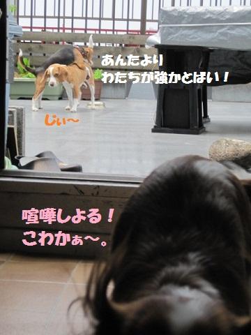 020_20110603075151.jpg