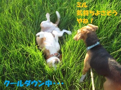 026_20110629105336.jpg
