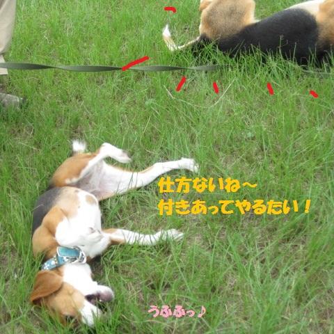 031_20110801072131.jpg