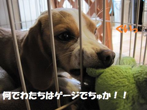 036_20110620081946.jpg