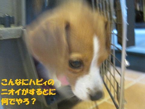 037_20110617072536.jpg