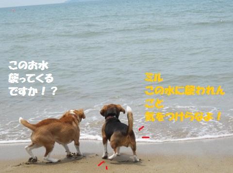 037_20110719070911.jpg