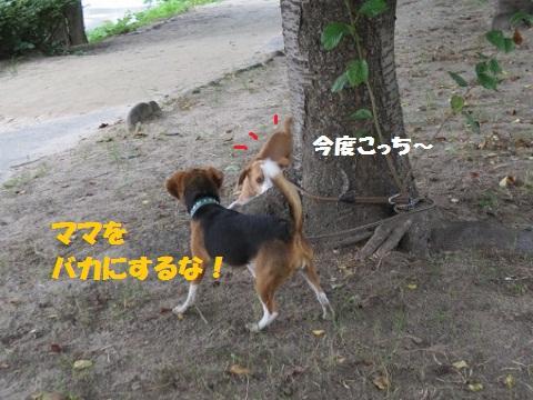 041_20110804070239.jpg