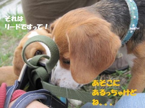 043_20110525075108.jpg