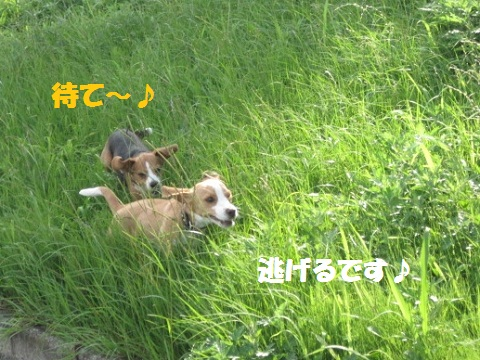043_20110712072307.jpg