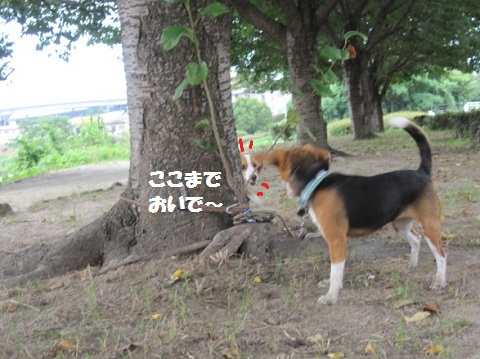 044_20110804070240.jpg