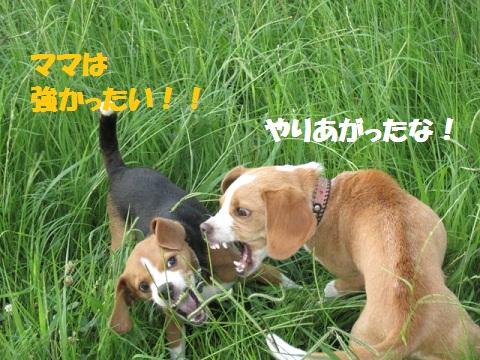 061_20110712072306.jpg