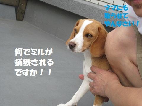 091_20110731081326.jpg