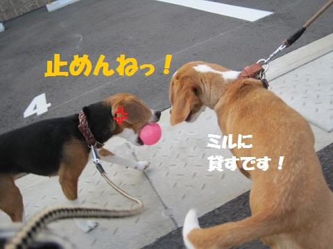 095_20110618072945.jpg