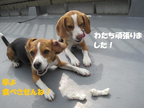 104_20110520071704.jpg
