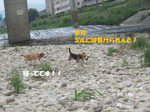 104_20110604071819.jpg