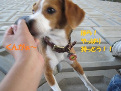 105_20110830071937.jpg