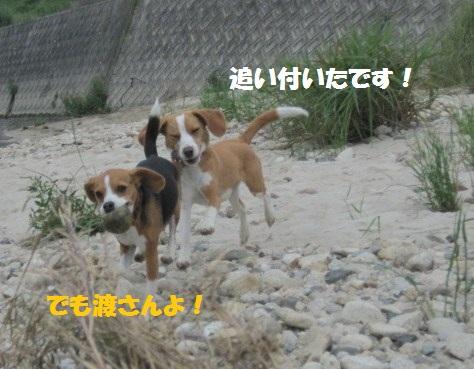 106_20110604071819.jpg