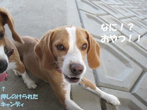 107_20110830072052.jpg