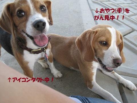 108_20110830071936.jpg