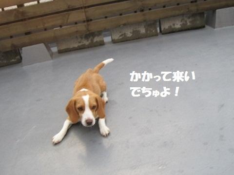123_20110716074629.jpg